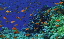 Sharm Diving Holidays