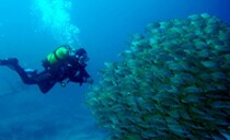 Tenerife Diving Holidays